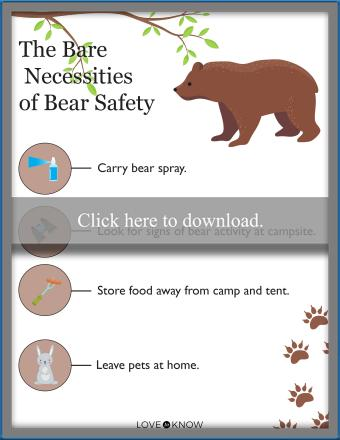 The Bare Necessities of Bear Safety
