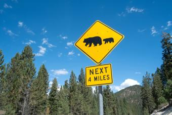 Bear warning sign on highway 56, South Lake Tahoe, Nevada, USA