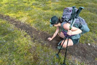 Women sizes up a grizzly bear track in the mud