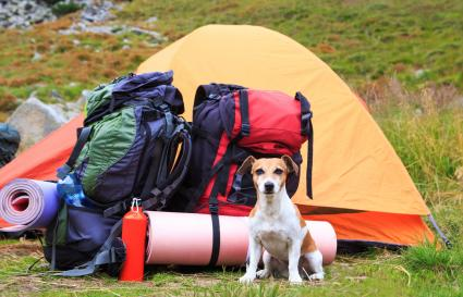 Dog sitting in front of tent with camping supplies