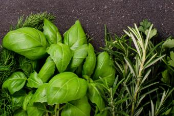 Herbs for green spell candle spell