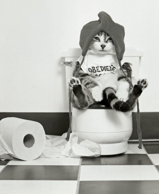 Kitty-on-the-throne.jpg