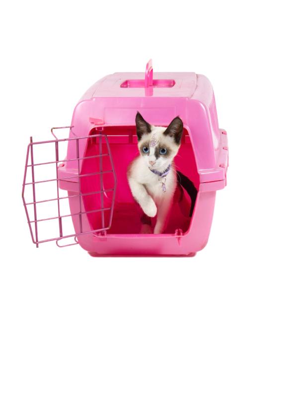 0678b2fdd5e Choices in Feline Pet Carriers | LoveToKnow