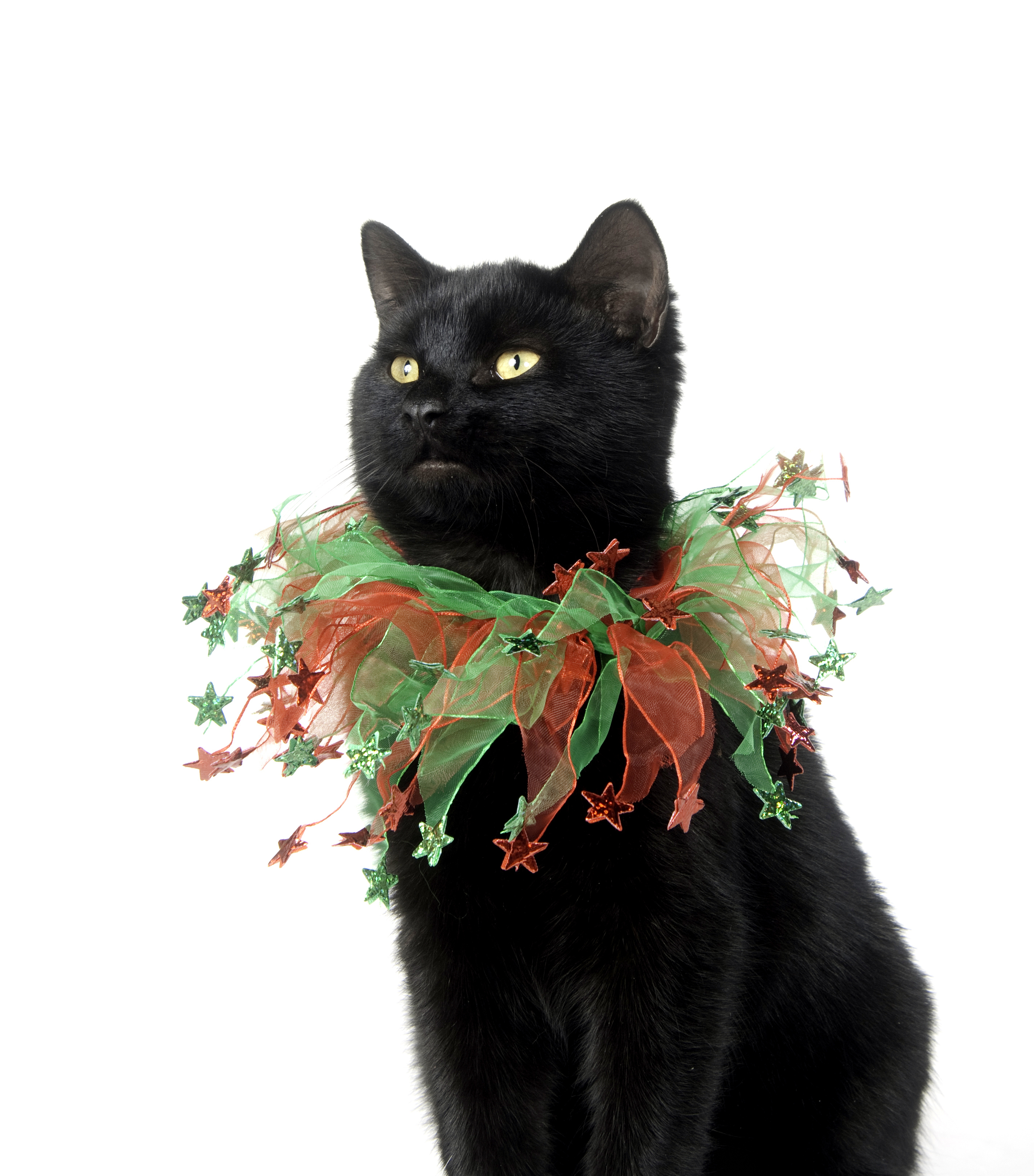 holiday cat collars that get your kitty in the spirit lovetoknow