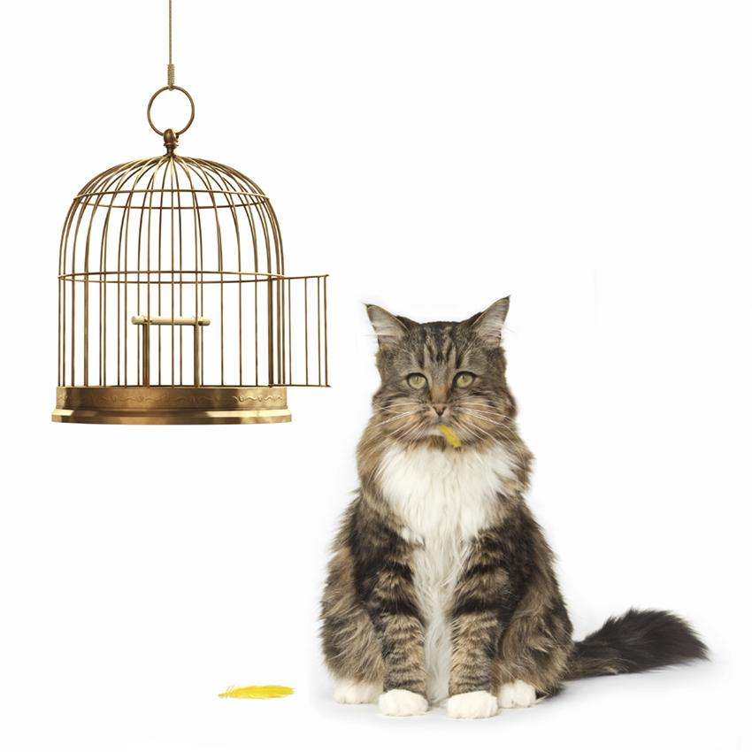 cat-bird-cage.jpg