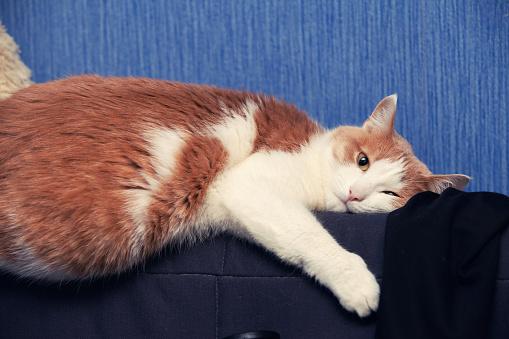 Understanding Hypothyroidism In Cats Lovetoknow