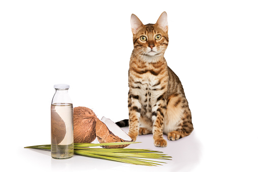 7 Amazing Ways to Use Coconut Oil for Cats   LoveToKnow