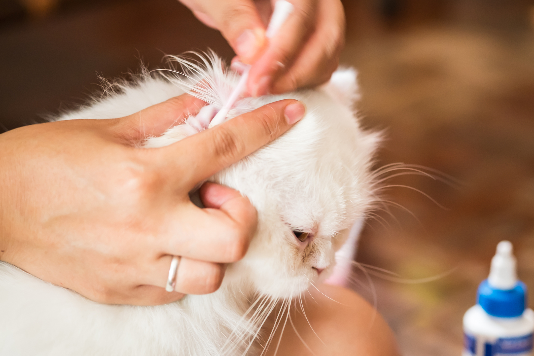 Home Reme s for Cat Ear Mites