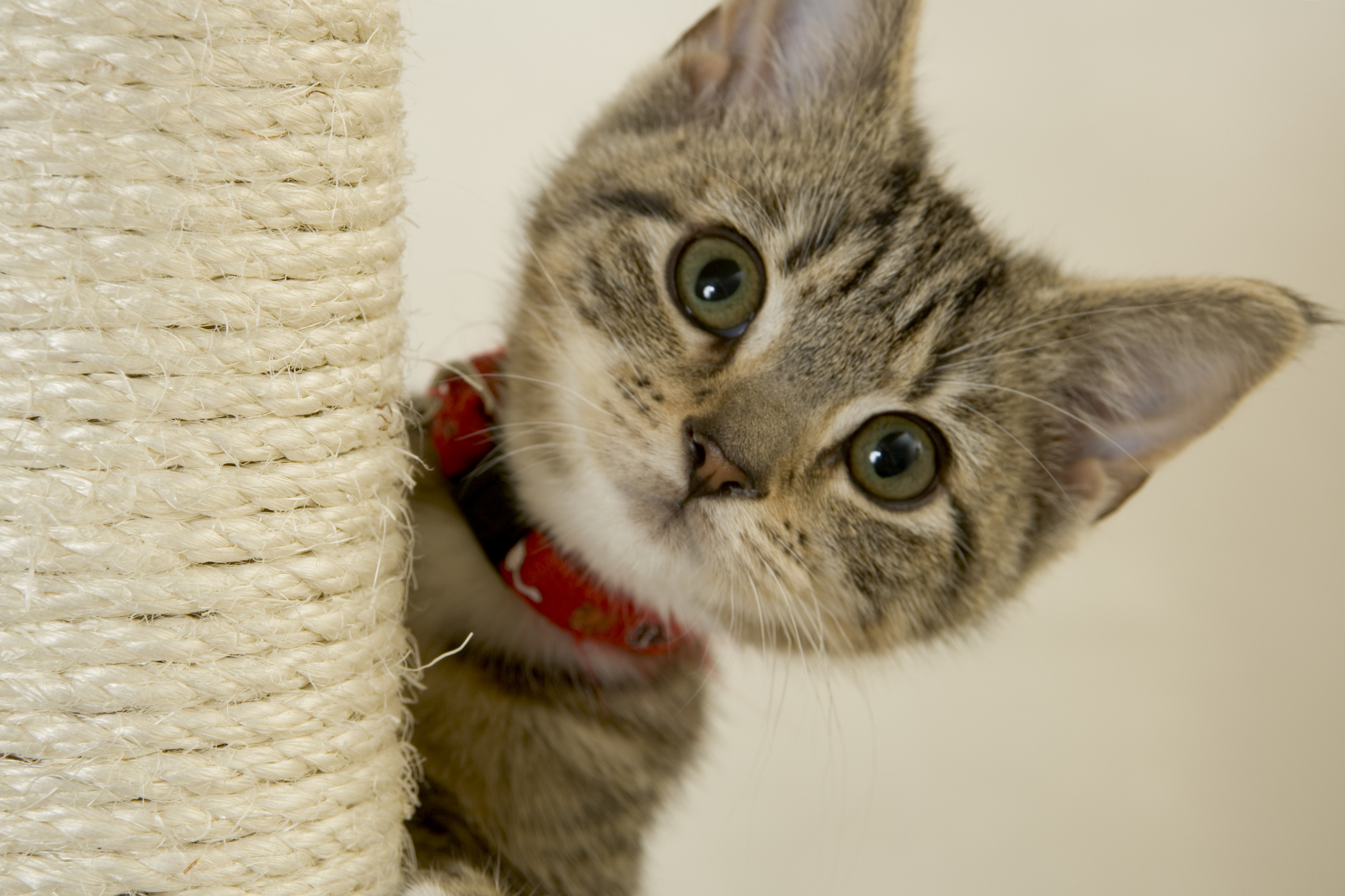 kitten flea and tick prevention