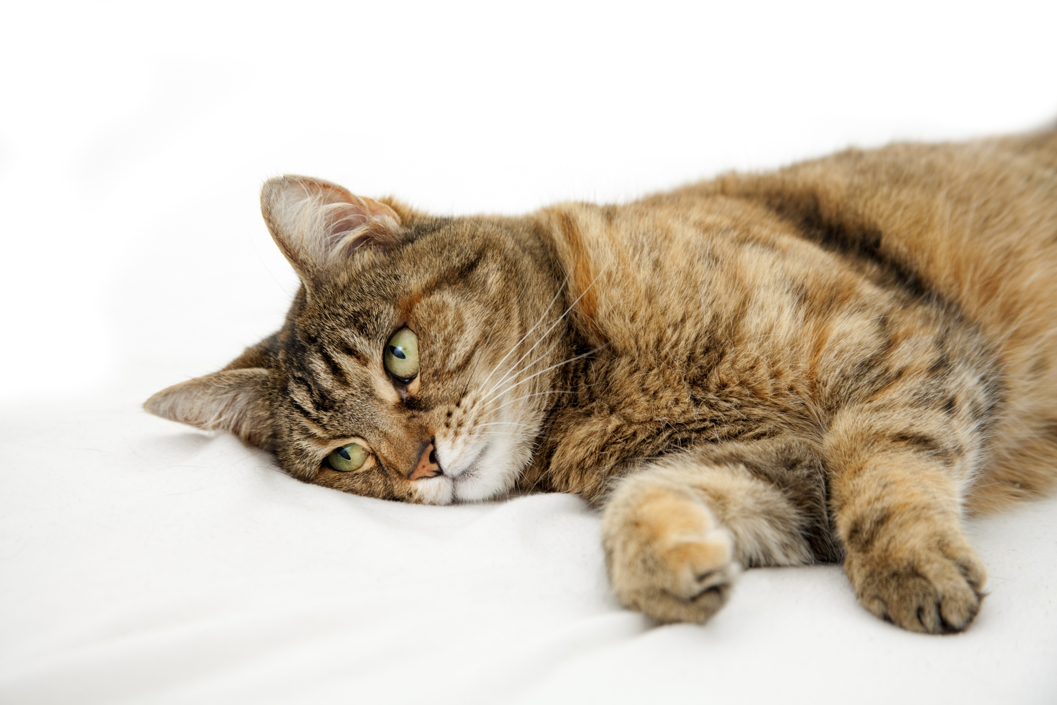 Caring for a Sick and Dying Cat | LoveToKnow