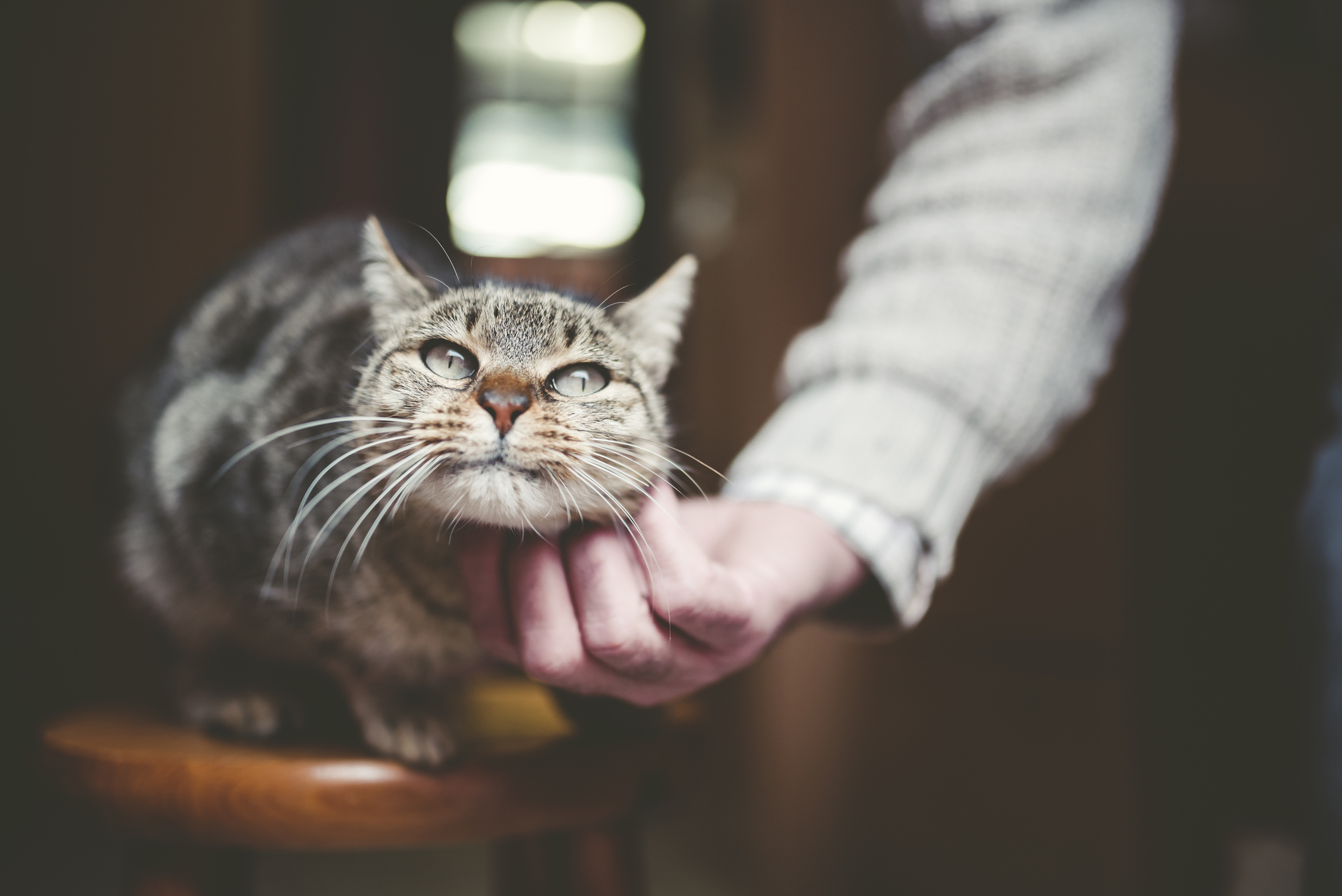 how to get cat urine smell out of wood furniture