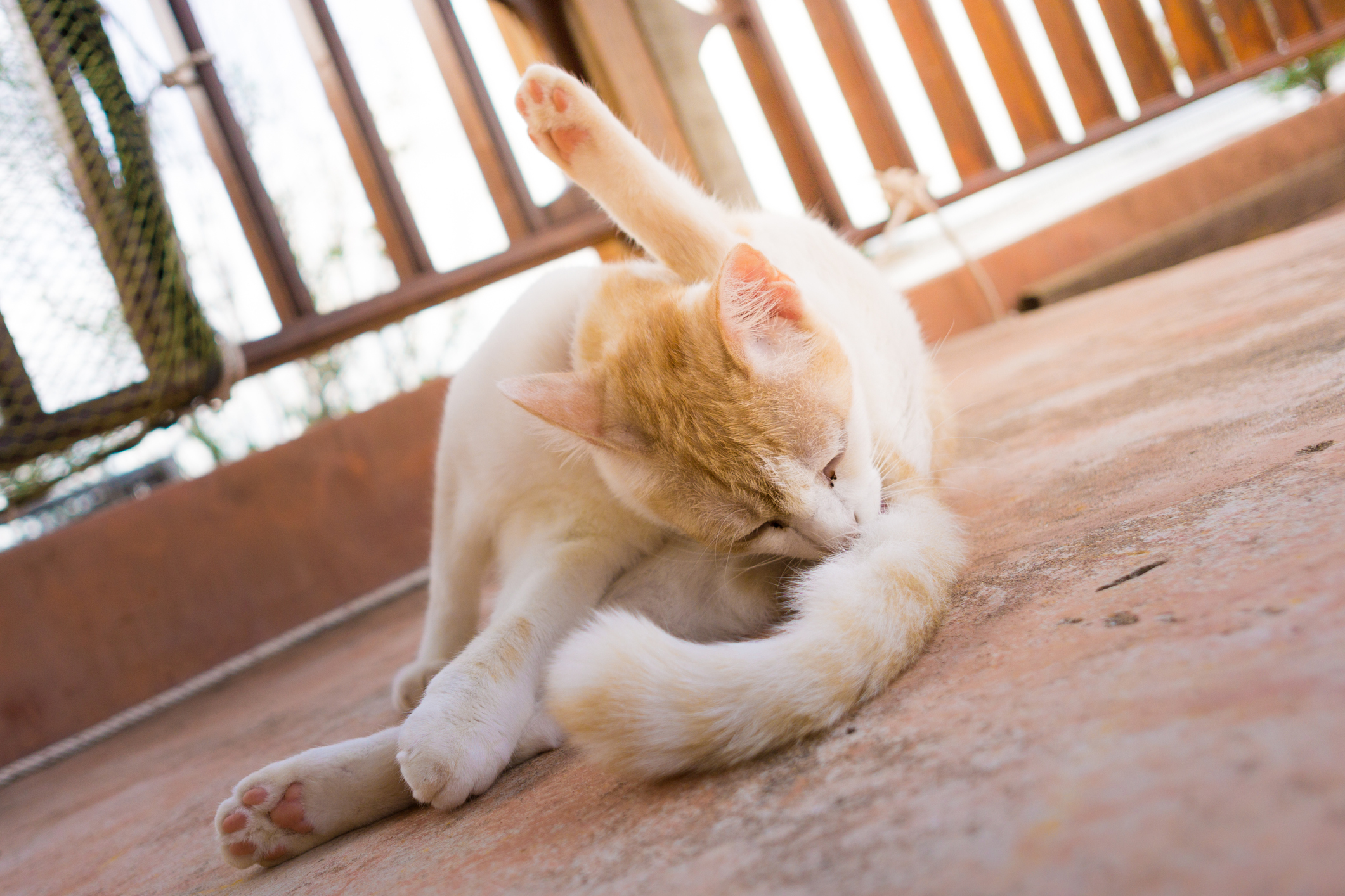 Feline Rectal Bleeding Lovetoknow