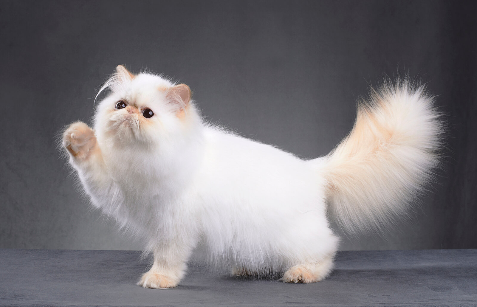 Best Trimmer for Persian Cat Hair  LoveToKnow