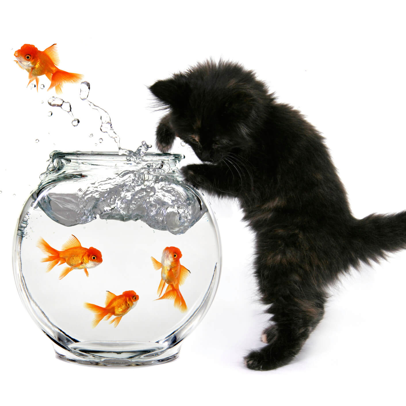 1-funny-kittens.jpg