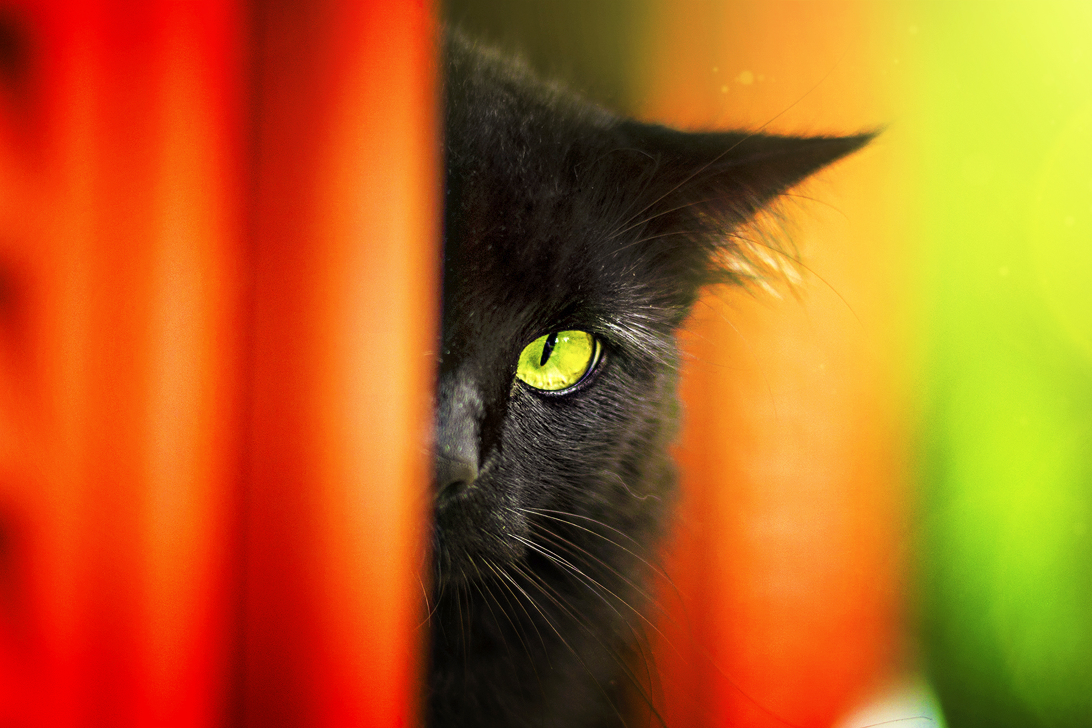 Beautiful Pictures Of Black Cats Lovetoknow