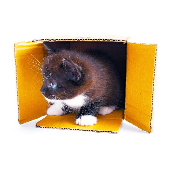 kitten-in-box-copy.jpg