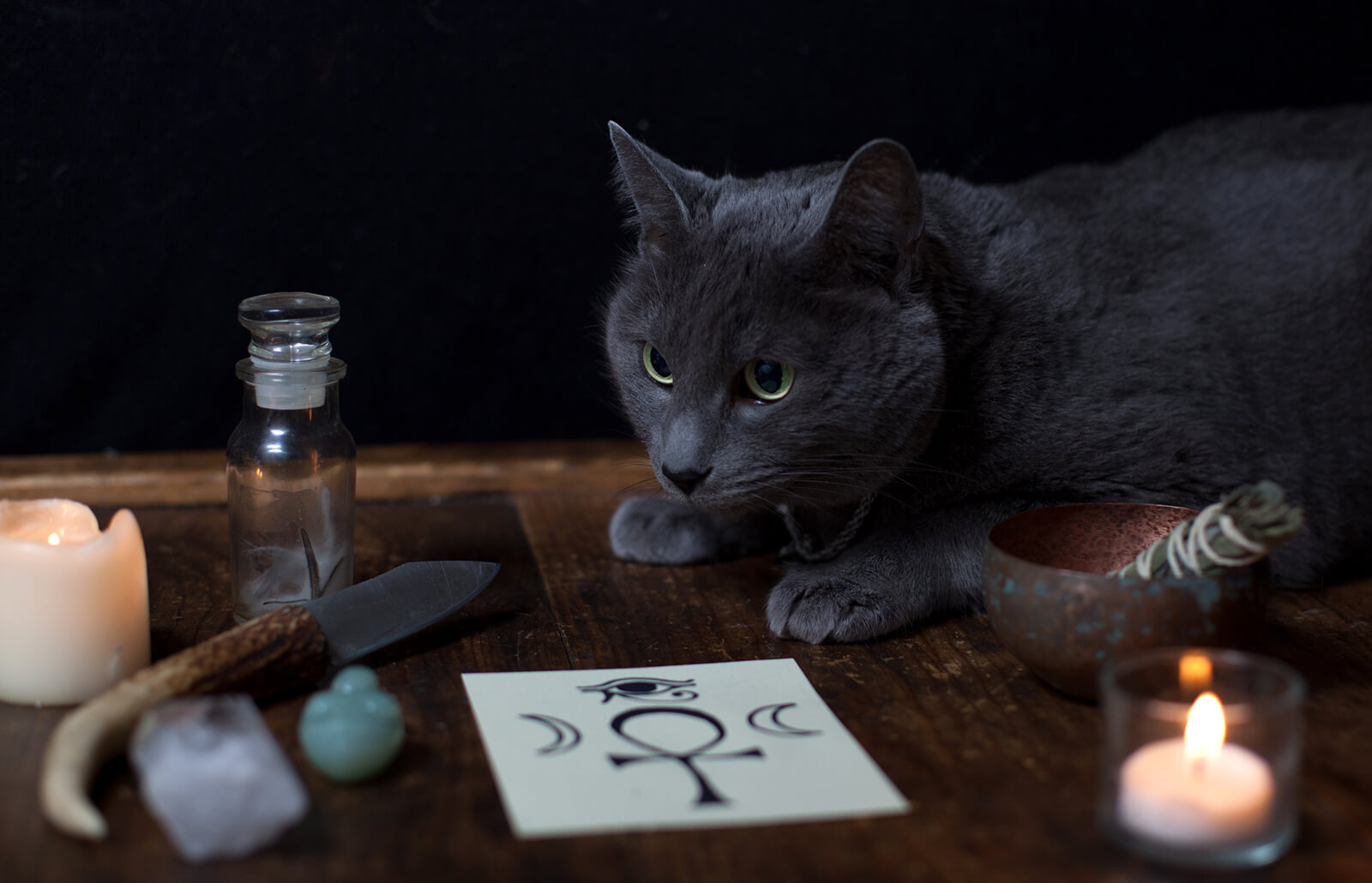 Magical Cat Names For Your Mystical Feline Lovetoknow