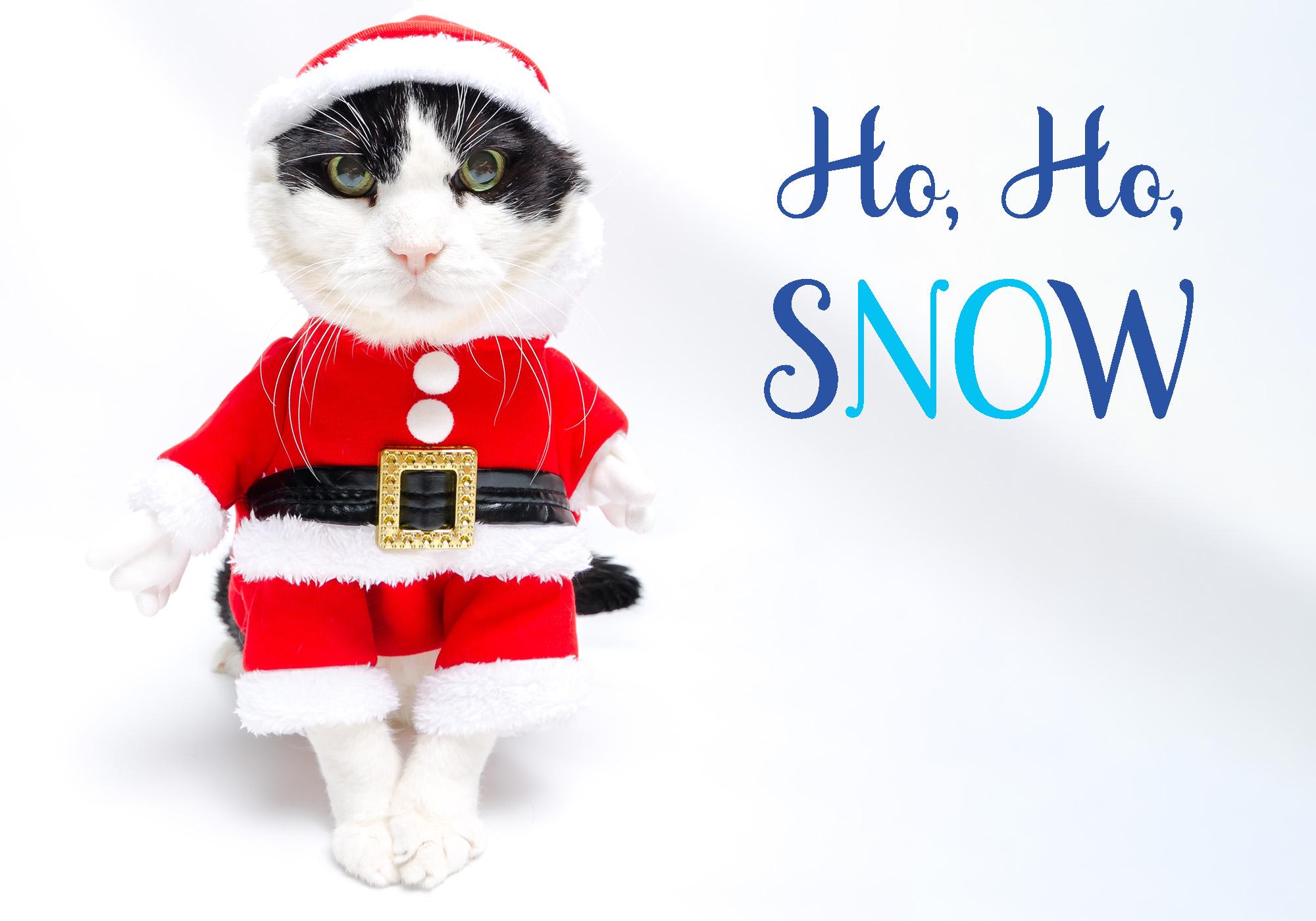 1_Cat_Santa_Outfit_meme.jpg