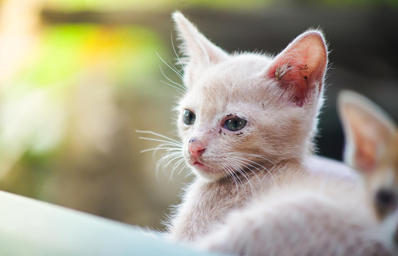 Fading Kitten Syndrome Symptoms And Treatments Lovetoknow