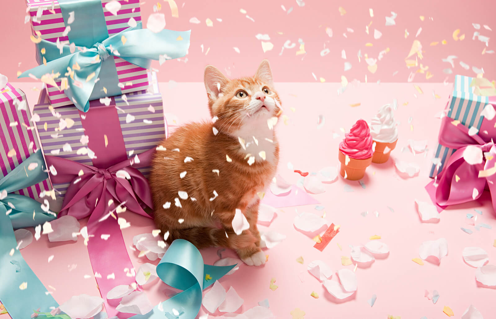 Fun Ideas to Celebrate Your Cat's Birthday | LoveToKnow