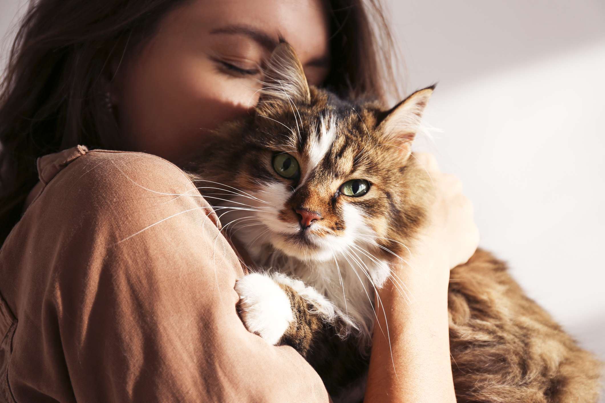 60 Cute Cat Quotes For Cat Lovers Lovetoknow