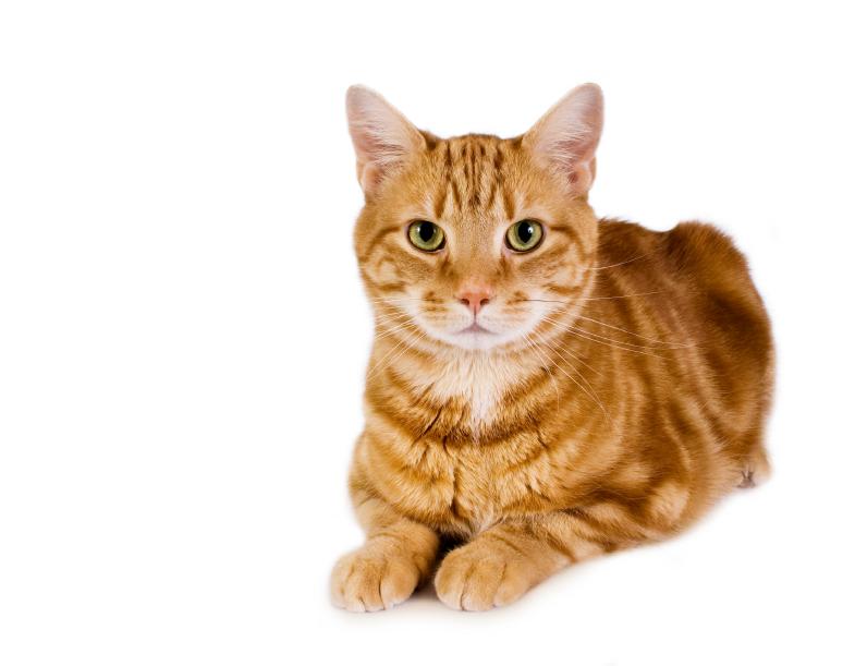 cat-slide-1.jpg