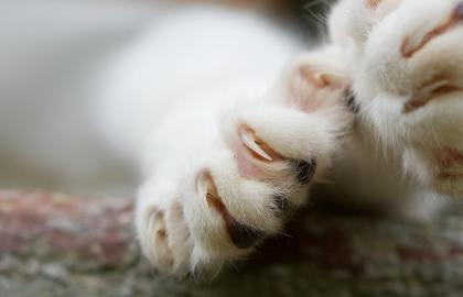 Cat paw with claws out