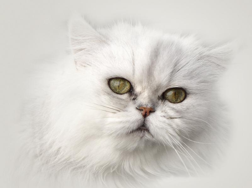 https://cf.ltkcdn.net/cats/images/slide/125511-801x599r1-Persian-portrait.jpg