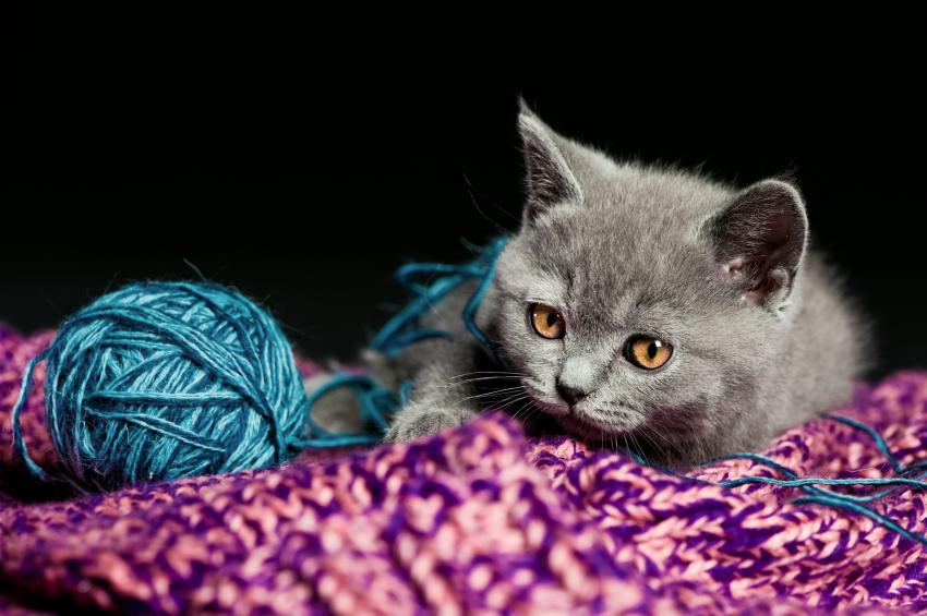 50+ Unique Names for Gray Cats and Kittens | LoveToKnow