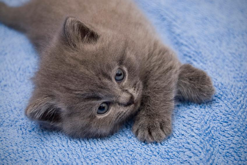 Cool Grey Kitten Names - Best Cat And Kitten Image And Photo