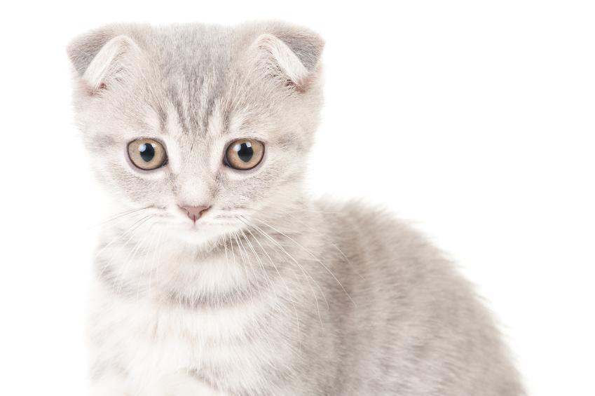 Cat Names For Peering