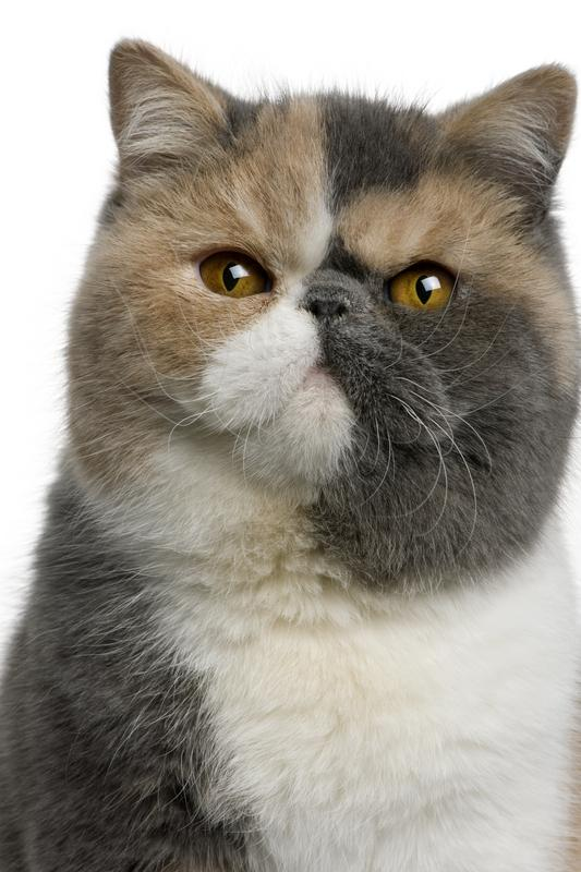 https://cf.ltkcdn.net/cats/images/slide/130985-533x800r1-Exotic.jpg