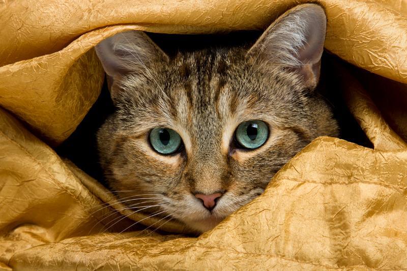 https://cf.ltkcdn.net/cats/images/slide/131217-800x533r1-Blue-eyed-Tabby.jpg