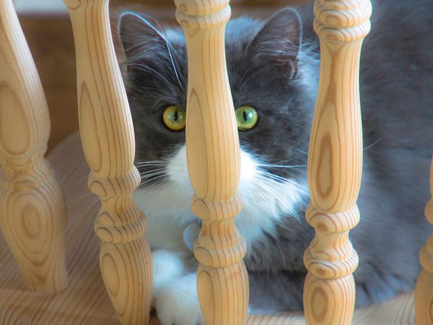 https://cf.ltkcdn.net/cats/images/slide/187774-850x638-cat-hiding-behind-chair-post.jpg