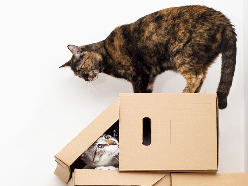 https://cf.ltkcdn.net/cats/images/slide/187775-850x638-cat-hiding-in-box.jpg