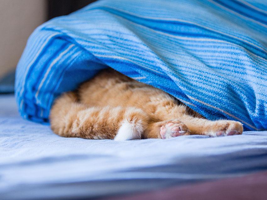 https://cf.ltkcdn.net/cats/images/slide/187779-850x638-cat-hiding-under-bed-sheet.jpg
