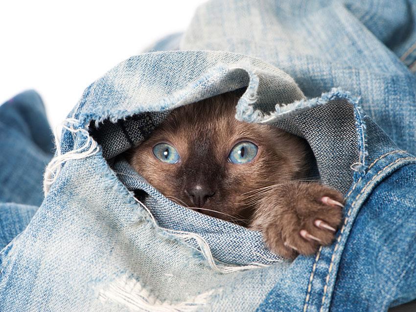 https://cf.ltkcdn.net/cats/images/slide/187786-850x638-kitten-hiding-in-jeans.jpg
