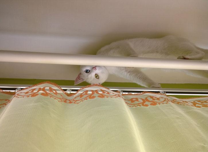 https://cf.ltkcdn.net/cats/images/slide/188590-725x532-cat-hiding-on-curtain-rod.jpg