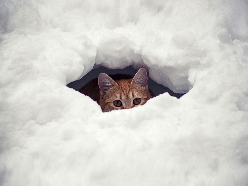 https://cf.ltkcdn.net/cats/images/slide/188592-850x638-cat-hiding-in-snow.jpg