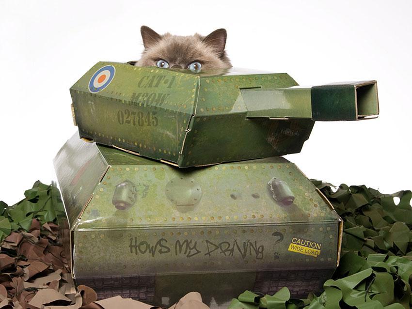 https://cf.ltkcdn.net/cats/images/slide/188593-850x638-cat-hiding-in-toy-tank.jpg