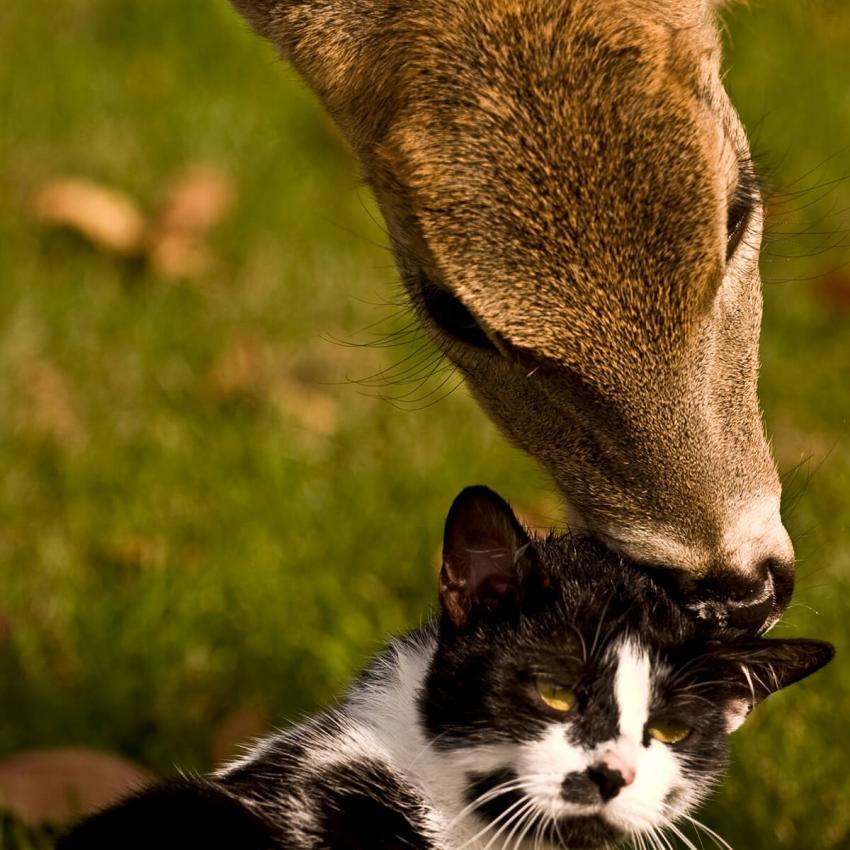 https://cf.ltkcdn.net/cats/images/slide/236308-850x850-3-cat-deer.jpg
