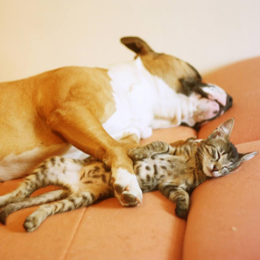 https://cf.ltkcdn.net/cats/images/slide/236309-850x850-5-dog-cat-napping.jpg