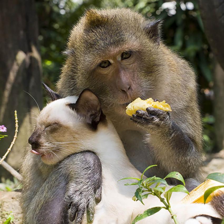 https://cf.ltkcdn.net/cats/images/slide/236312-850x850-4-cat-and-monkey.jpg