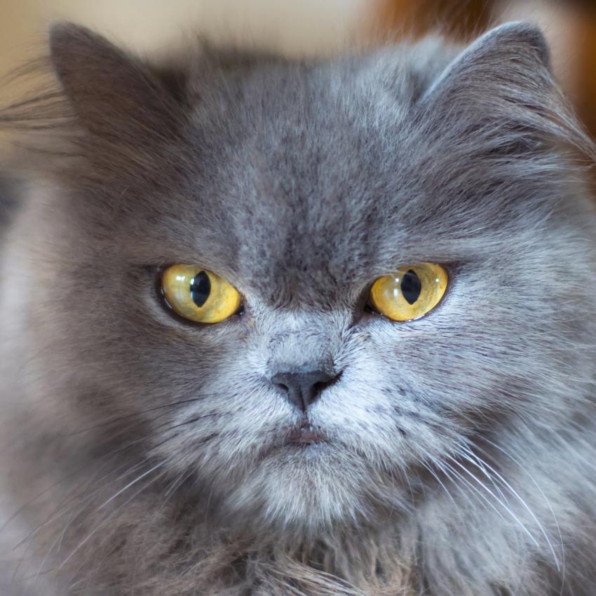 https://cf.ltkcdn.net/cats/images/slide/242151-850x850-blue.jpg