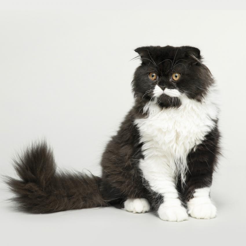 https://cf.ltkcdn.net/cats/images/slide/242152-850x849-black-and-white.jpg