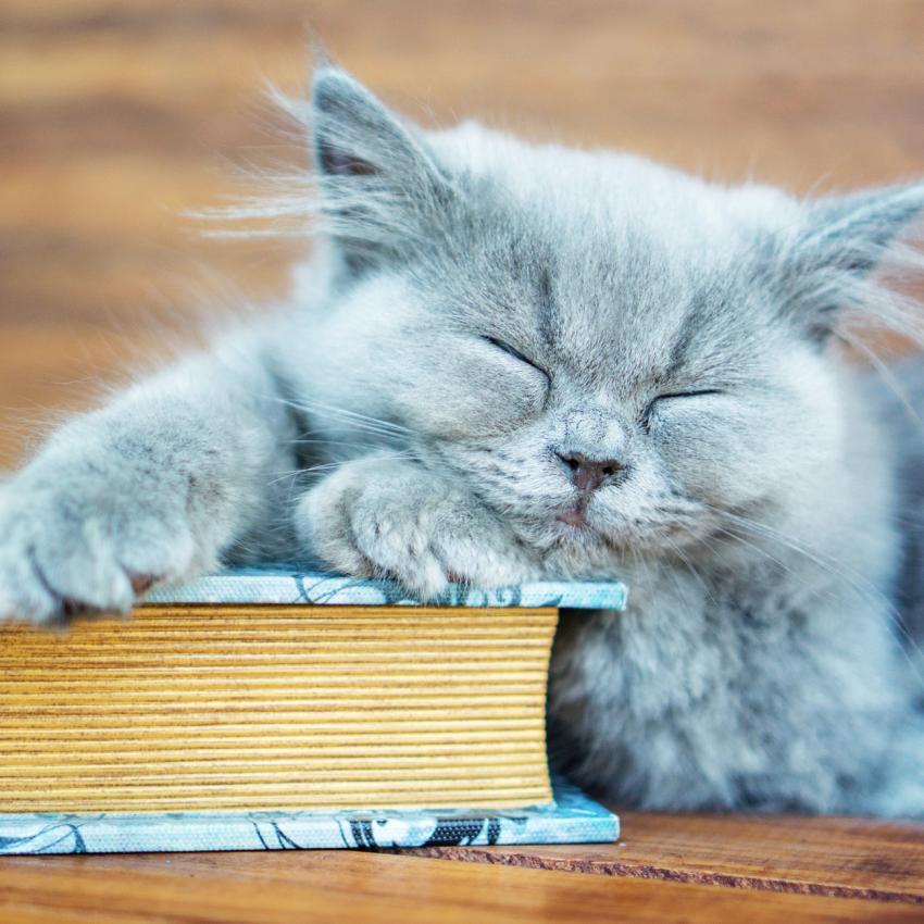 https://cf.ltkcdn.net/cats/images/slide/242153-850x850-cat-and-book.jpg