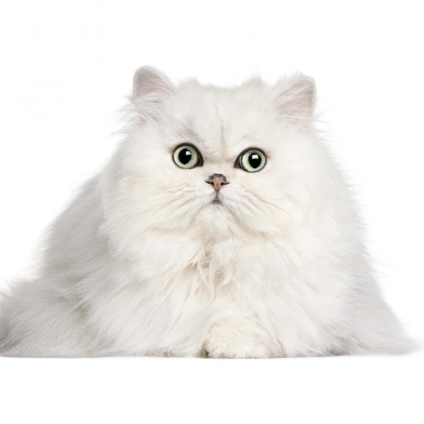 https://cf.ltkcdn.net/cats/images/slide/242154-850x850-white.jpg