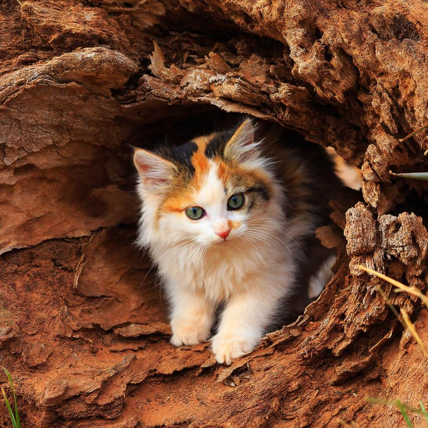 https://cf.ltkcdn.net/cats/images/slide/242621-850x850-9-adeventurous-kitten.jpg