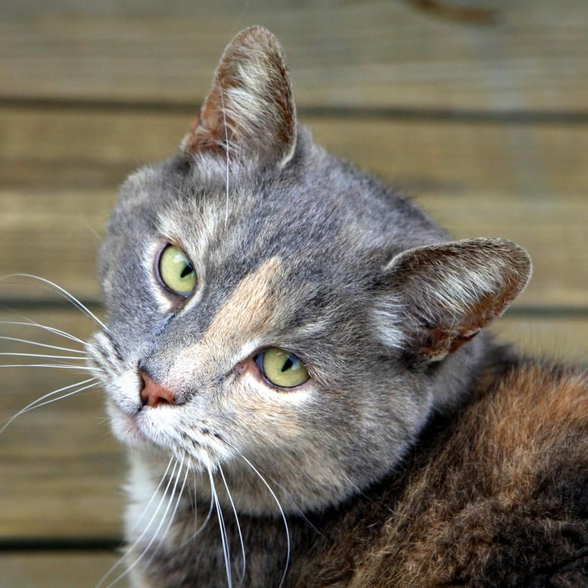 https://cf.ltkcdn.net/cats/images/slide/242622-850x850-10-soulful-look.jpg