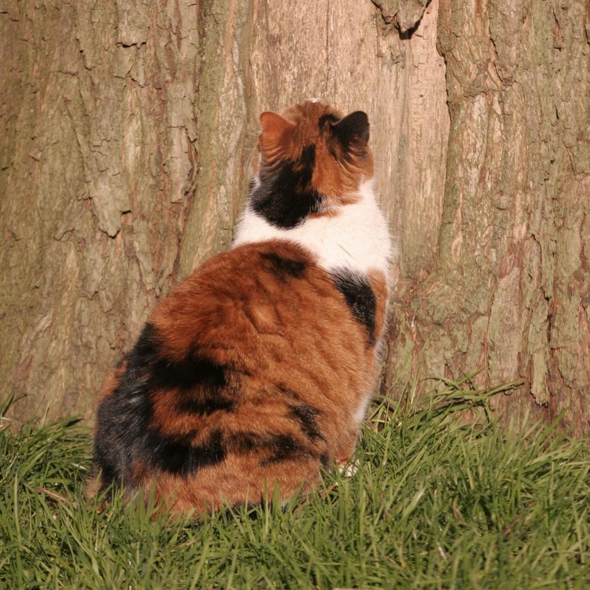 https://cf.ltkcdn.net/cats/images/slide/242626-850x850-2-calico-cats.jpg